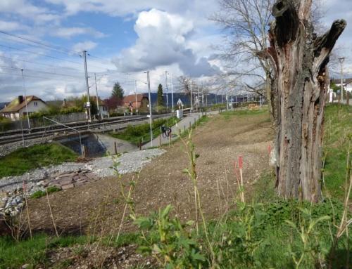 Umgestaltung Schäfliwiese Urdorf