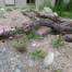 Frisch bepflanzte Ruderalfläche für Wildbienen